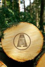 木の資源としての価値とは?のイメージ